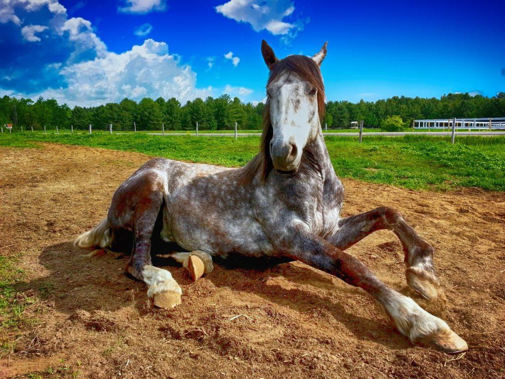 caballo-tordo-tumbado